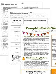 pumpkin-patch-image-2