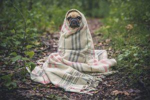 dog-in-blanket